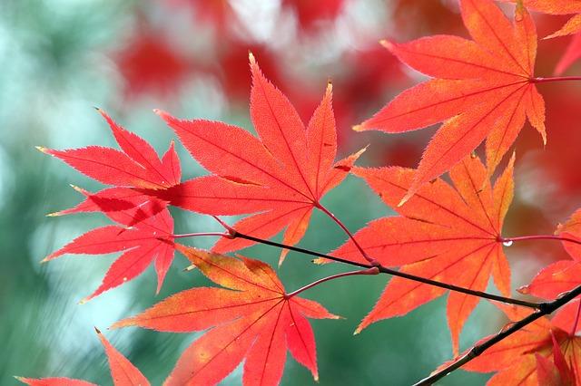 Poésie d'automne de Maurice Carême